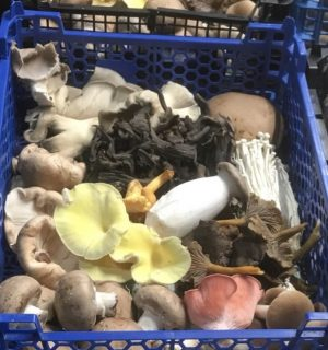 New Forest Wild and Exotic Mushrooms