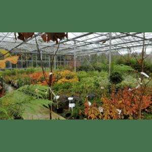 Shallowmead Nurseries Ltd