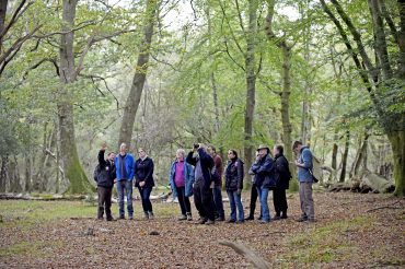 New Forest Walking Festival is back
