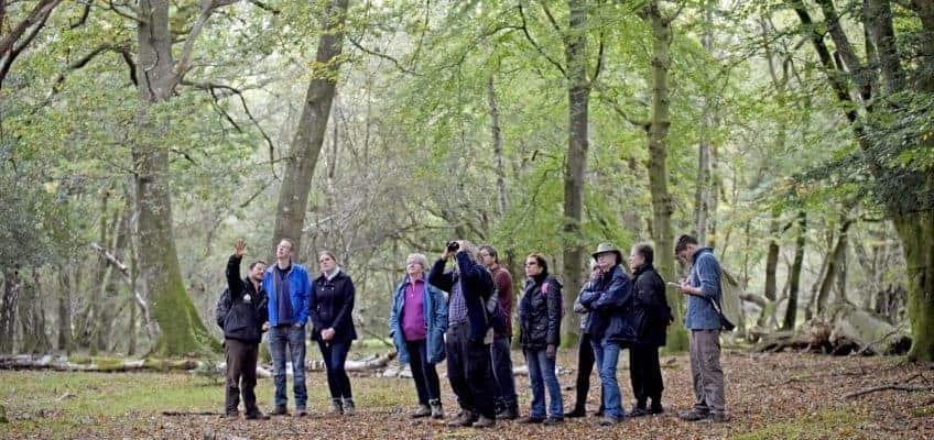 New Forest Walking Festival is back