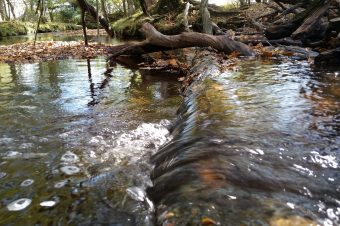 Snap up prizes in New Forest autumn photo competition