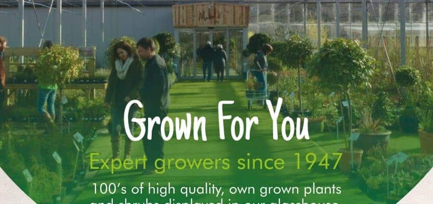 Come and help Shallowmead Nurseries celebrate their 70th Anniversary