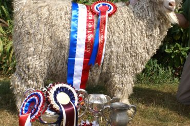 New Forest Mohair wins Supreme Show Champion