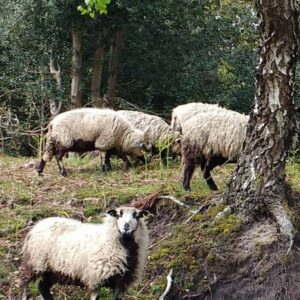 Forest Meats @ Manor Farm