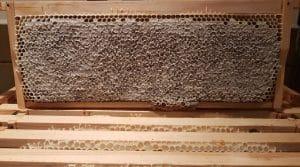 Stu's Bees
