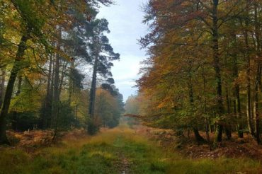 Autumn offers from Burley Manor and New Forest Hotels