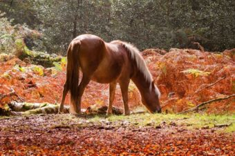 Respect and care for the New Forest this October half term