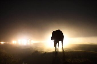 Caution urged as the deadliest month for New Forest animal accidents approaches